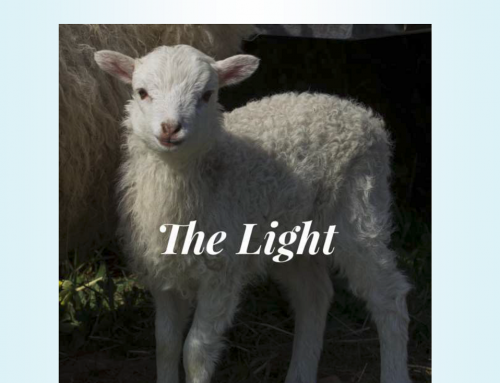 The Light – April 2019