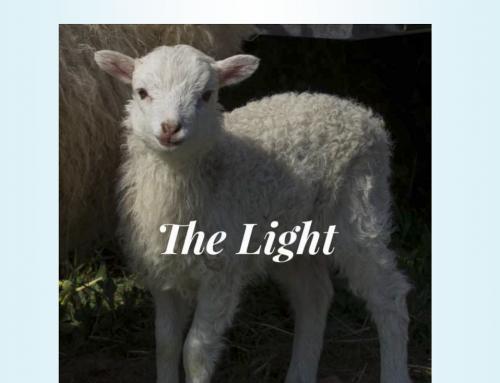 The Light – April 2019
